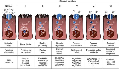 cystisk fibrose levealder